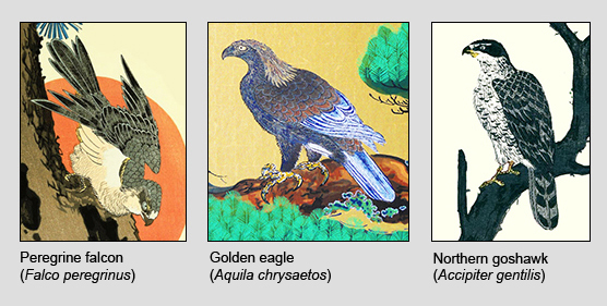 Falcon Eagle and Hawk examples