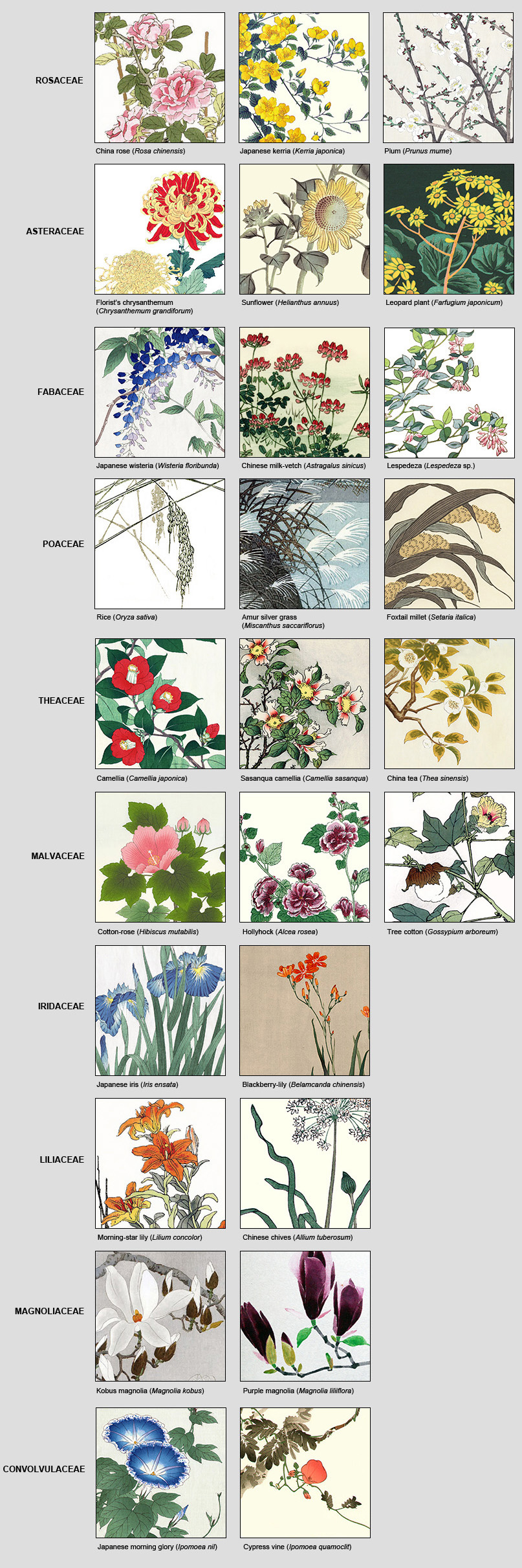 Plant Families Blog Of The Reader Collection Of Japanese Flower